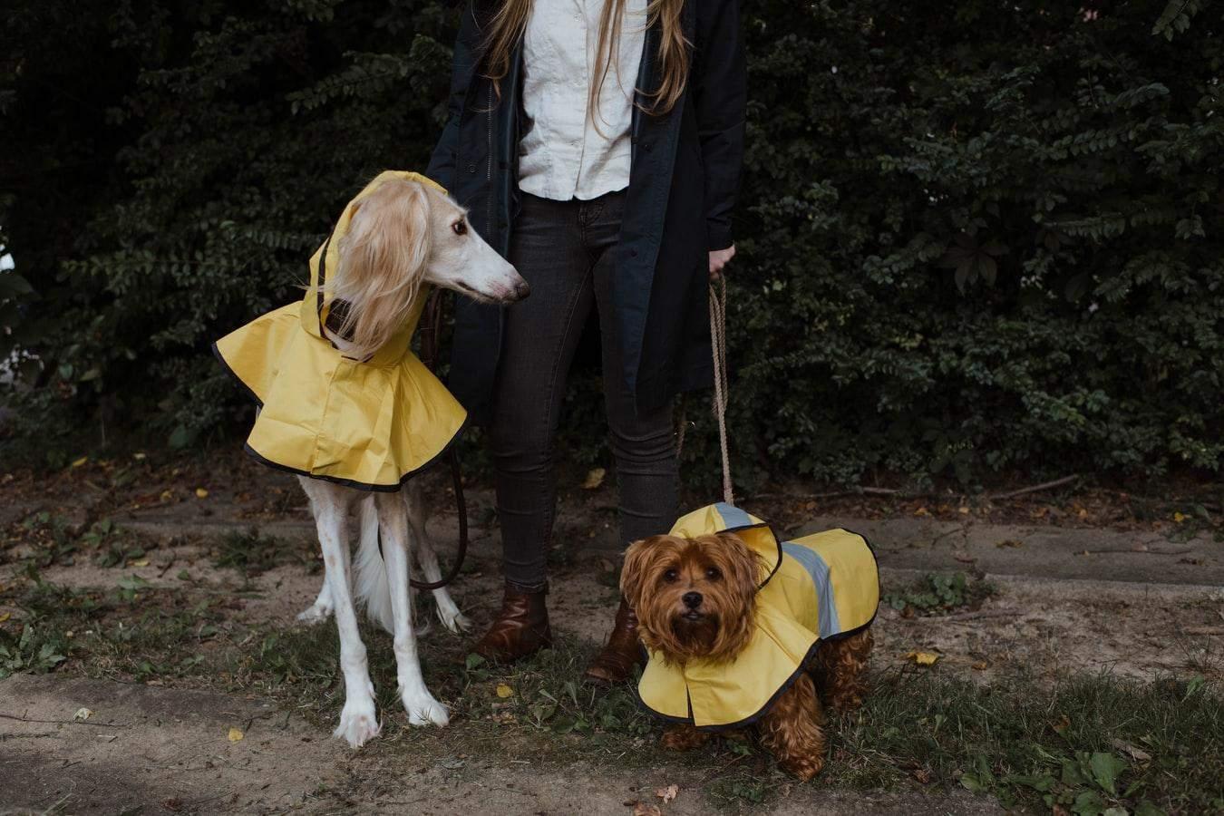 Гулять с собакой нужно в любую погоду