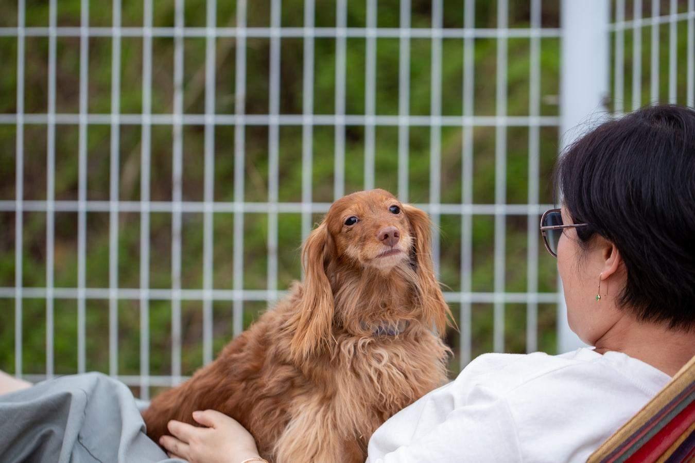 Собаки могут ревновать хозяев даже из-за собственной фантазии