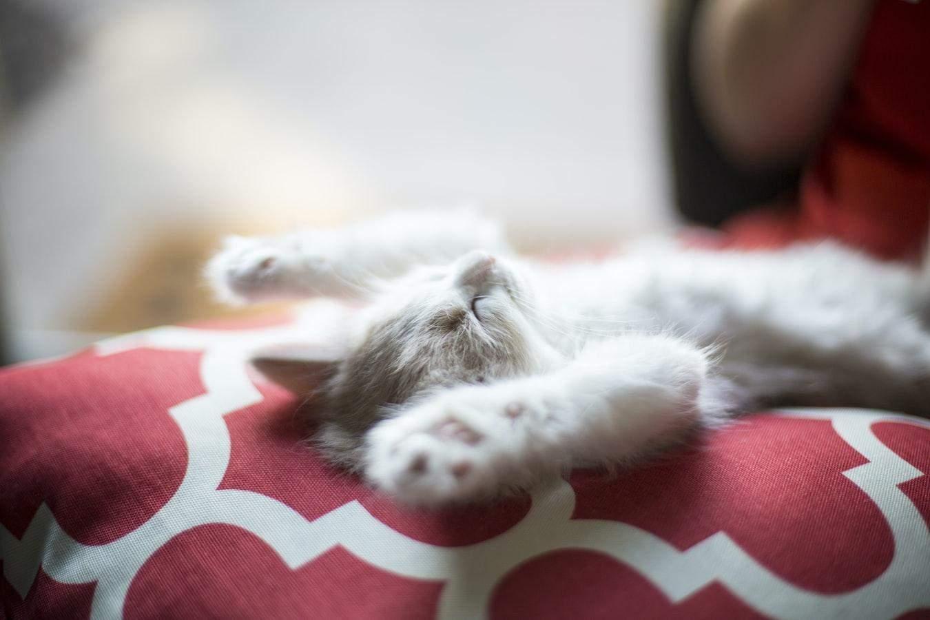 Если кошка ложится спать рядом с вами – так она проявляет свою любовь