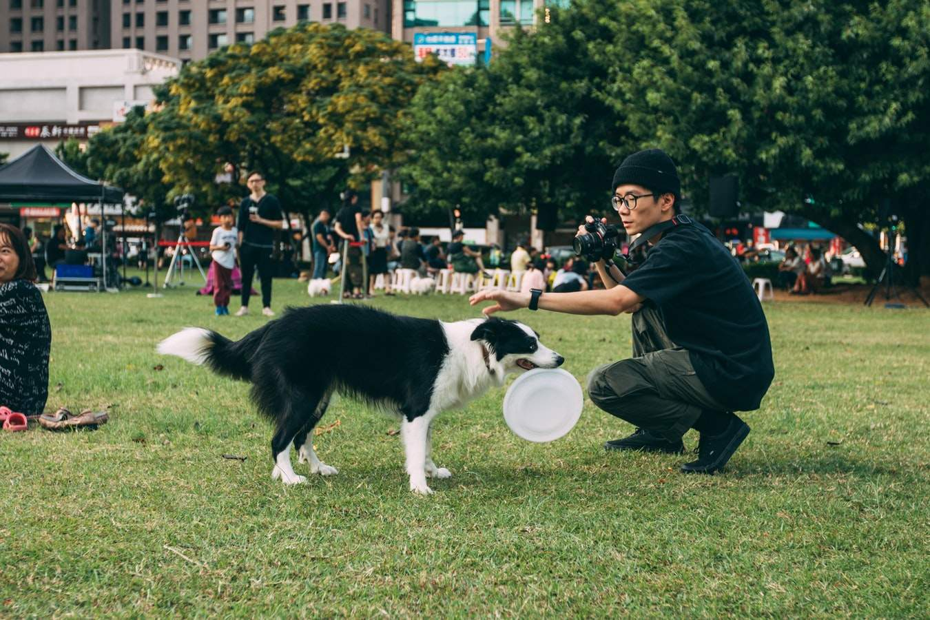 Чіткі правила дають собаці відчуття спокою й безпеки