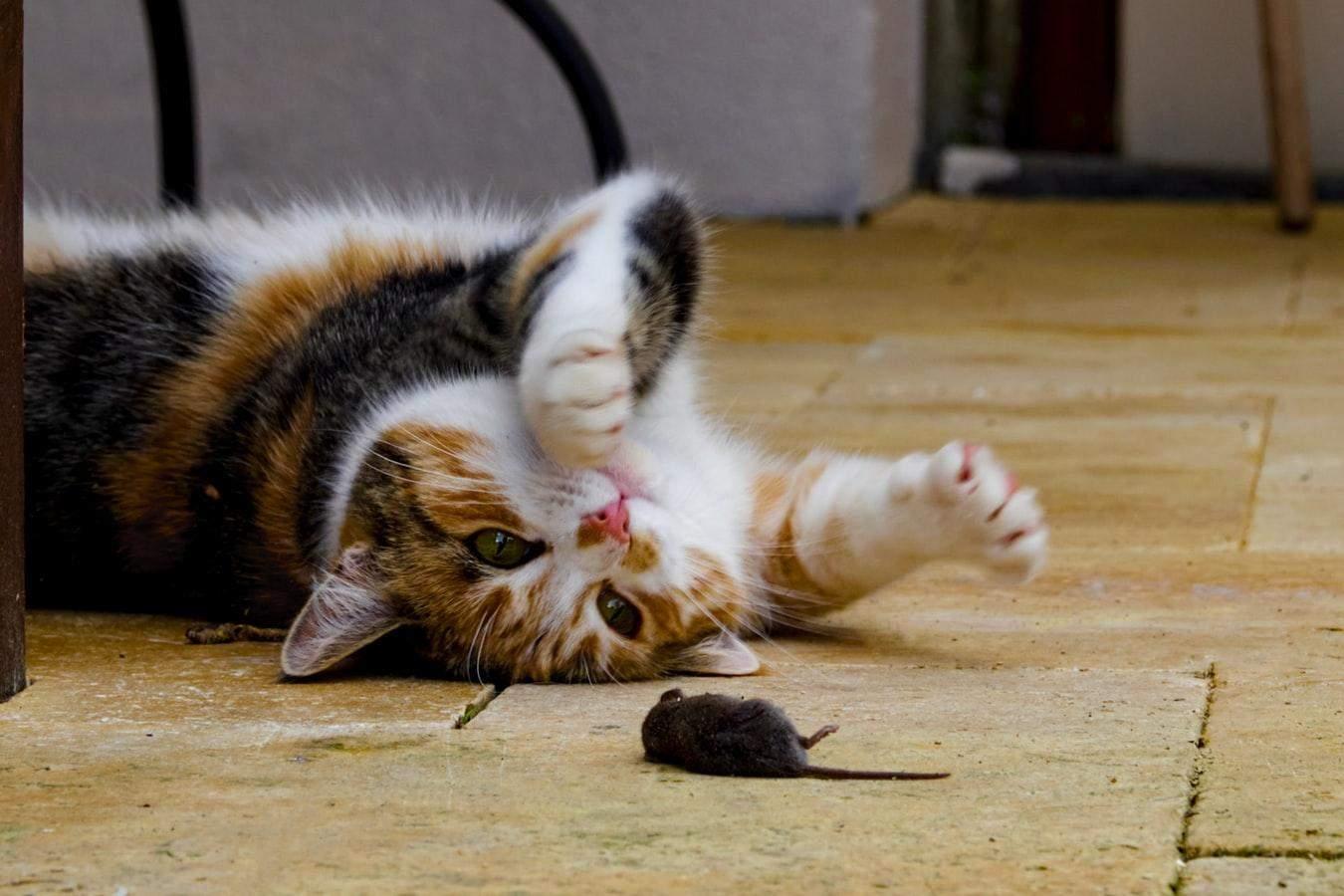 Коты приносят добычу, чтобы научить хозяев охотиться