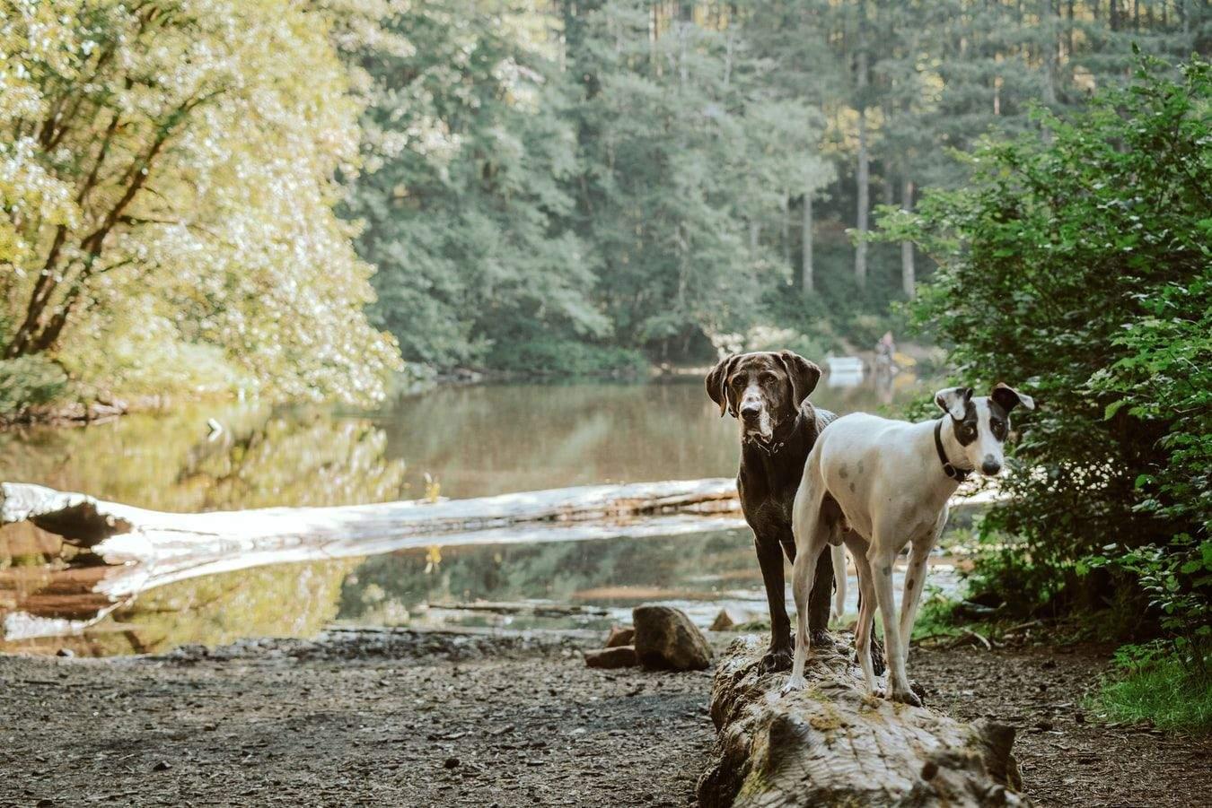 Гулять с собаками нужно не только в пределах города, но и на природе