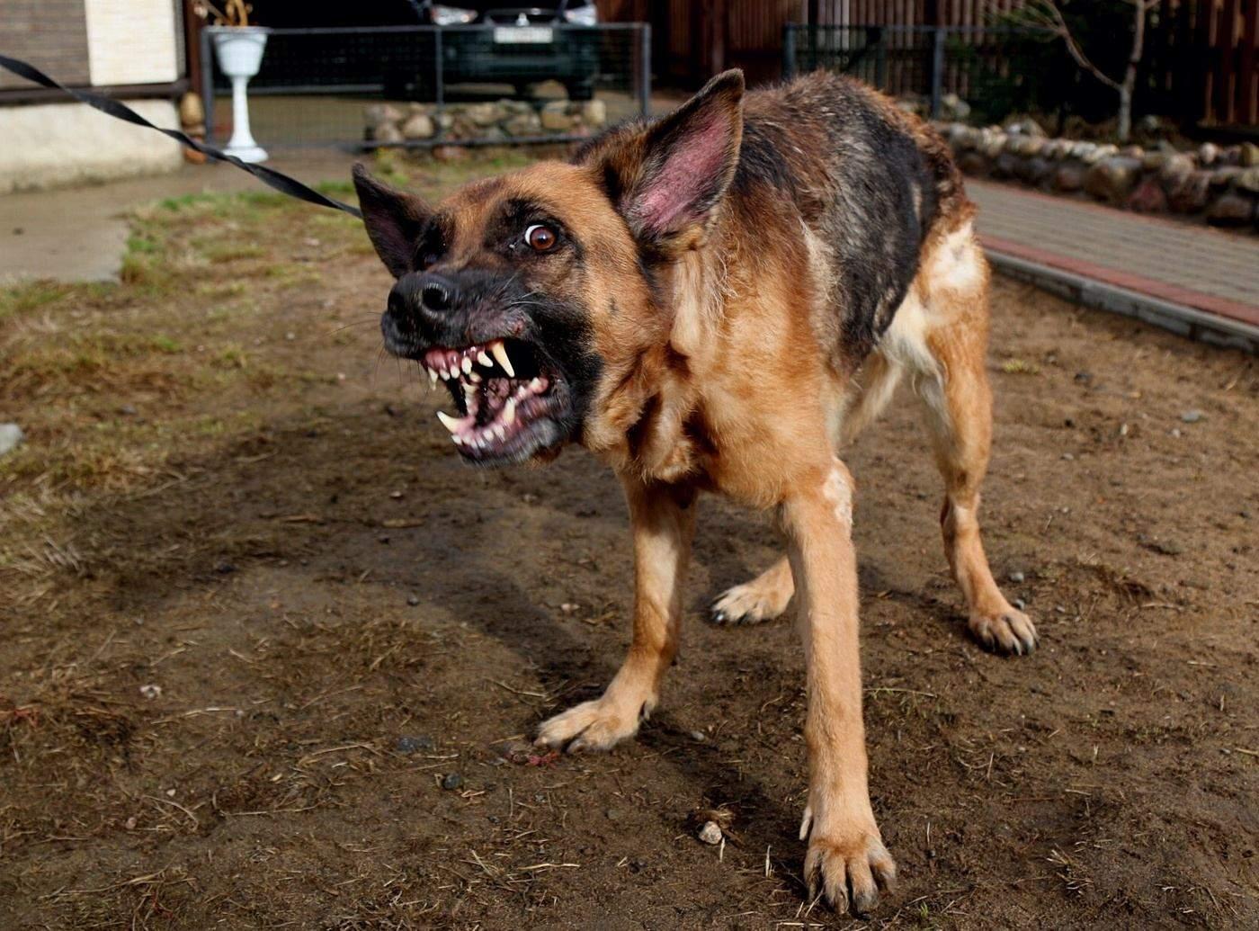 Іноді гавкотом собаки демонструють страх