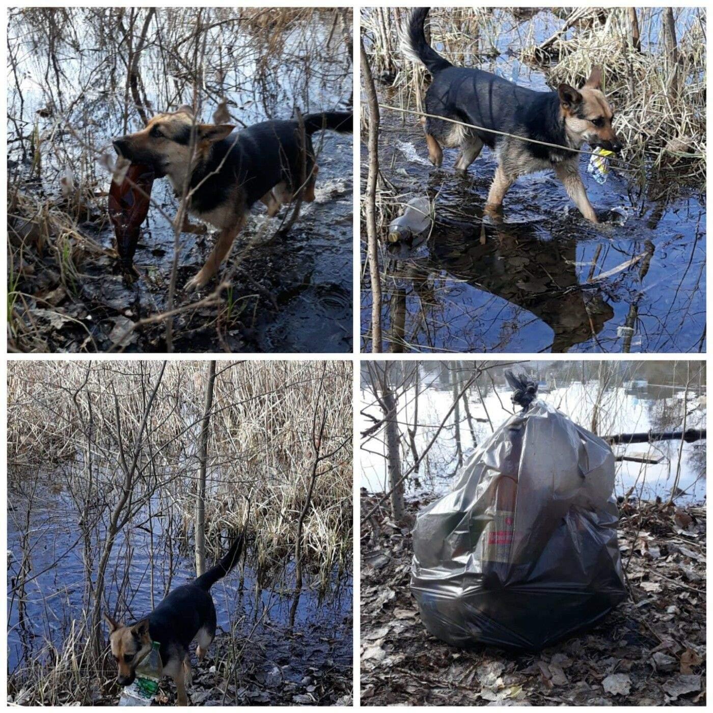Люди помогают собаке и составляют мусора в пакеты