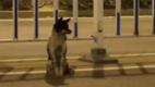 Собака в Китае три месяца ждет на трассе свою погибшую хозяйку: видео