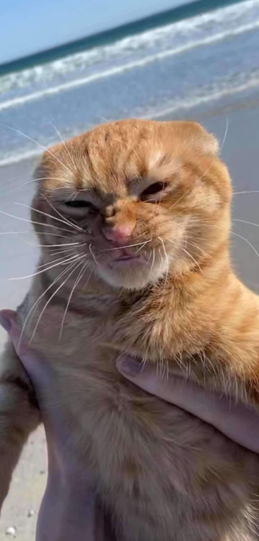 У кота было очень смешное выражение морды