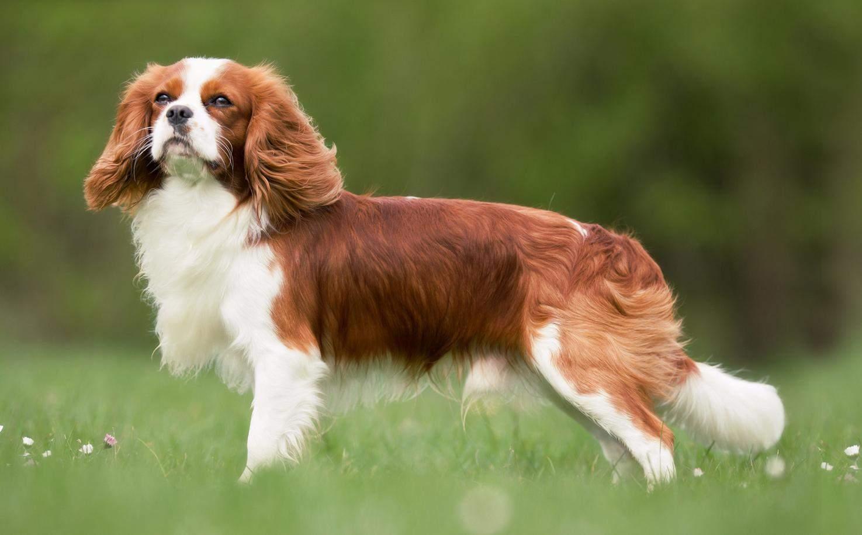 Ці собаки товариська та добрі / Фото lapki.pet