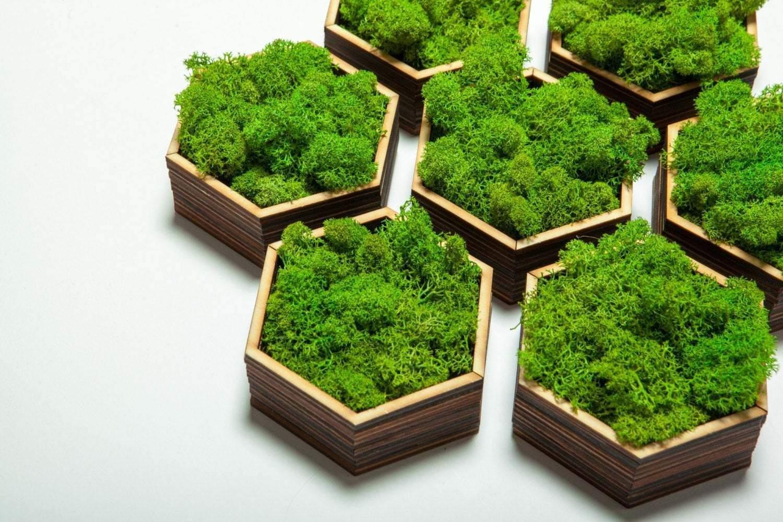 Невеликі стильні вироби з мохом
