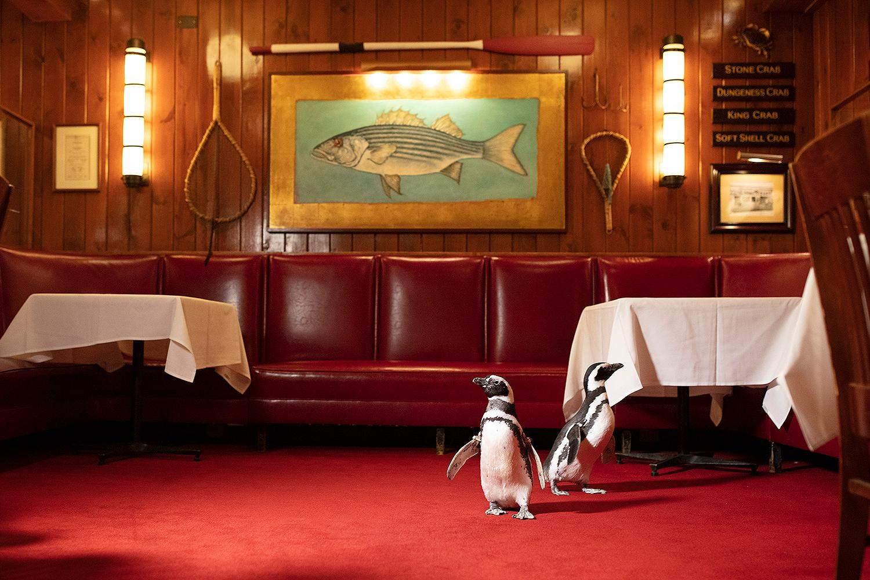 Во время визита птиц ресторан был закрыт