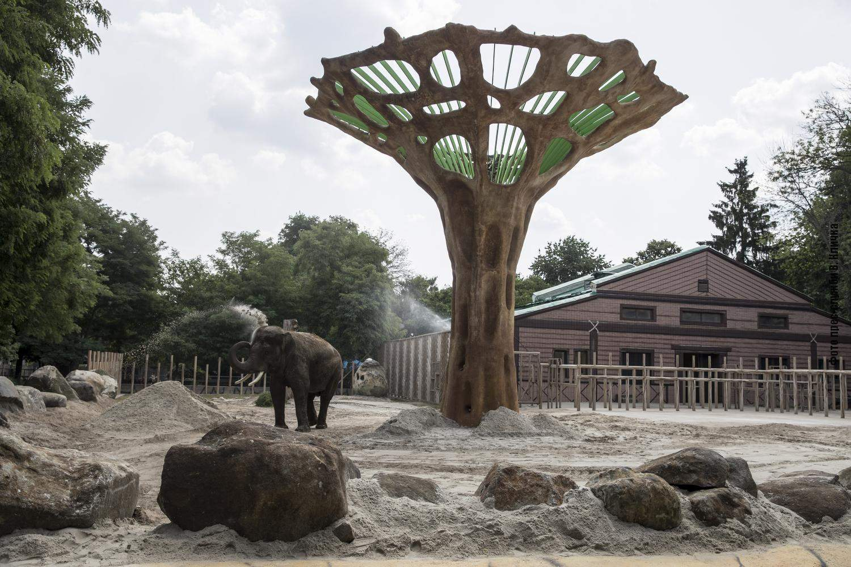 Баобаб створює атмосферу африканської савани