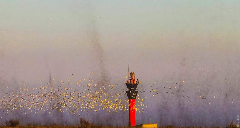 Рій комарів на Одещині Комарі-дзвінці Нацпарк Тузлівські лимани