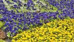 Найбільший квітковий прапор України з'явиться у Києві