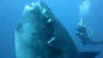 Ученые нашли новый вид рыб