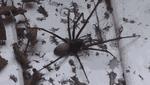 Павук-гігант налякав фермера: страхітливі фото і відео