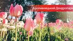 Кропивницький Дендропарк замайорів тюльпанами: неймовірні фото з соцмереж
