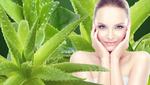 Как использовать алоэ для красоты: 5 идей