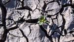 Внаслідок тривалої спеки сільське господарство Німеччини зазнало мільярдних збитків