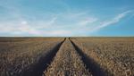Запрет на продажу земли в Украине не будет действовать 20 дней: известна причина