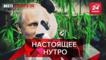 Вести Кремля: Зачем Путину панды. Онлайн-знакомства по-русски