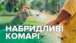 Нашестя комарів: як вберегти тіло від кровопивць
