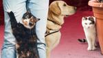 Как не потерять свое животное: практические советы специалистов