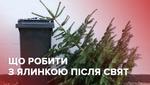 Ялинки небезпечно викидати на смітник: що робити з деревом після свят
