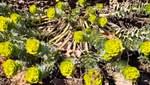 В Одесі квітнуть перші весняні квіти: фантастичні фото