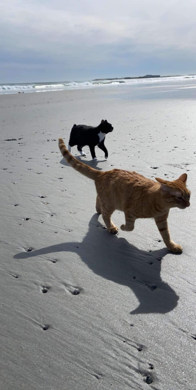 Сначала кот спокойно гулял со своим братом