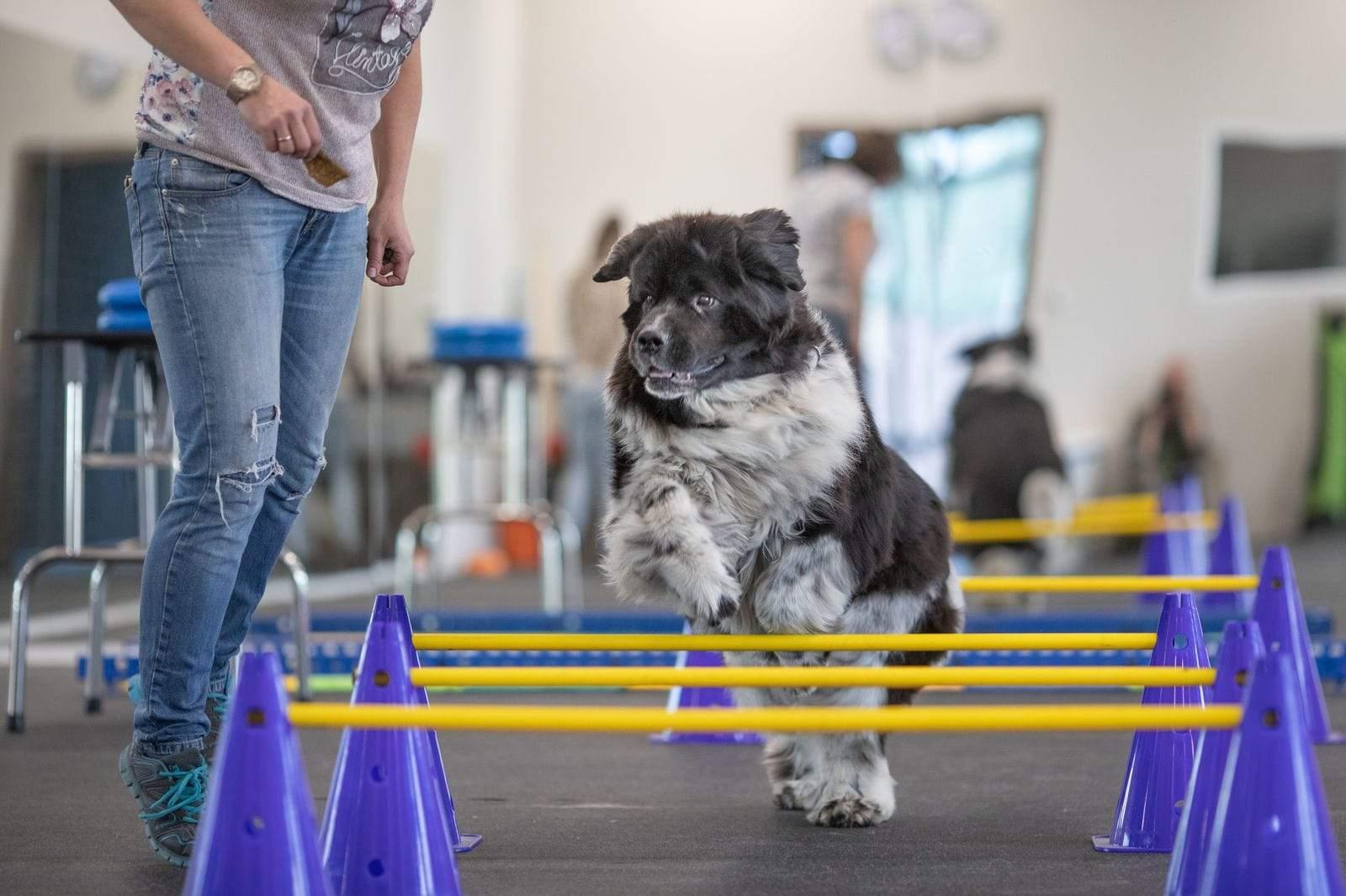 Найкраще тренувати собаку під наглядом фахівця