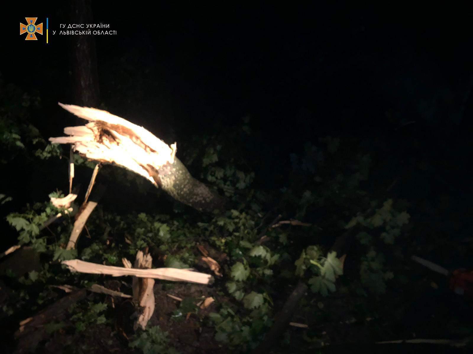 Загиблі, повалені дерева та потрощені автівки: наслідки шаленого буревію у Львові
