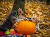 16 жовтня – яке сьогодні свято і що не можна робити в цей день
