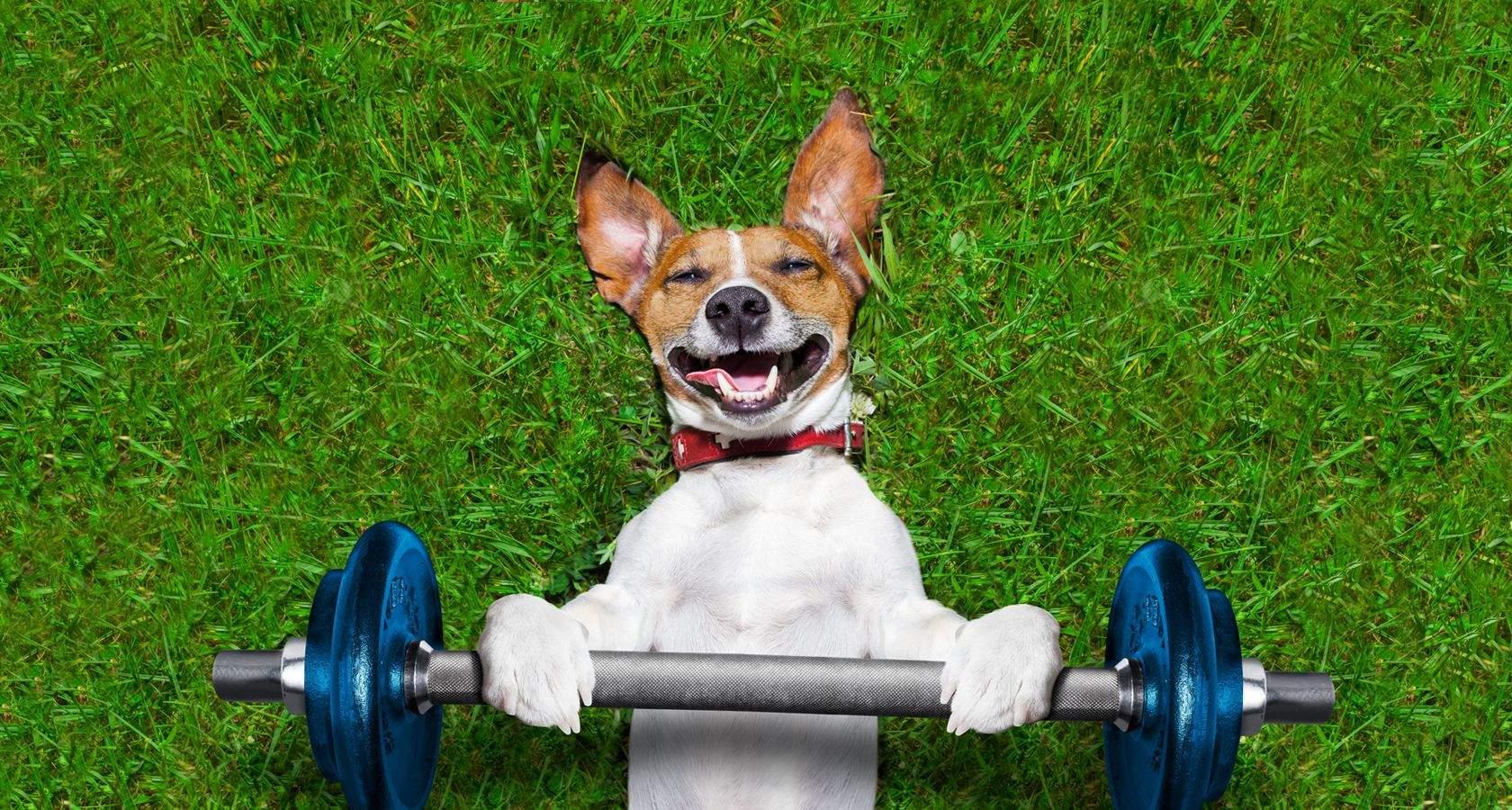Фітнес допомагає собакам залишатися в формі