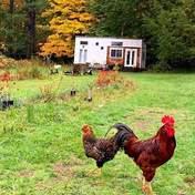 Вы захотите там жить: семья построила роскошный миниатюрный дом на ферме – фото