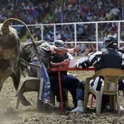 Экстремальный покер с быками — главное выжить: ВИДЕО