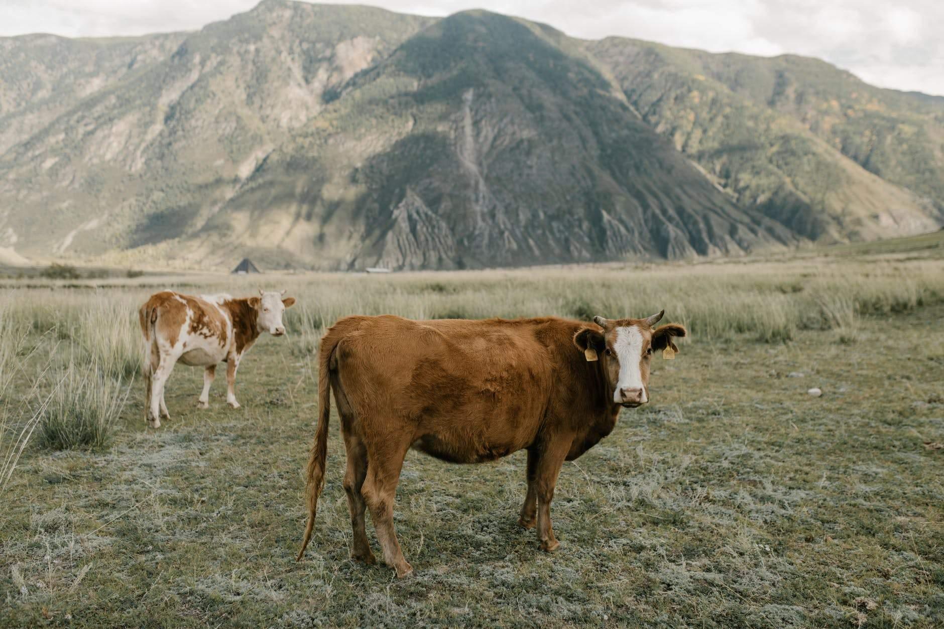 Найбільшої шкоди екології завдає їжа тваринного походження