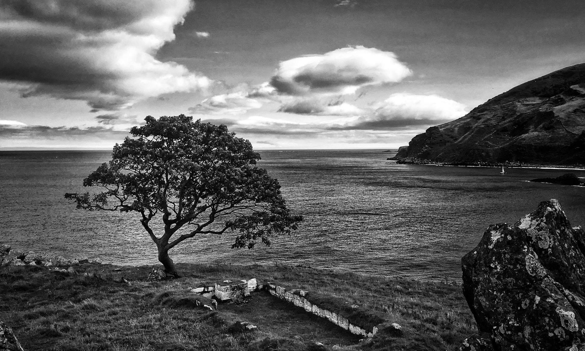 Дерево з Гри престолів