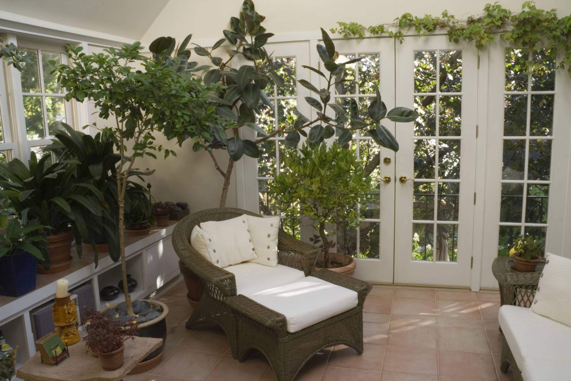 Кімнатні рослини різних розмірів