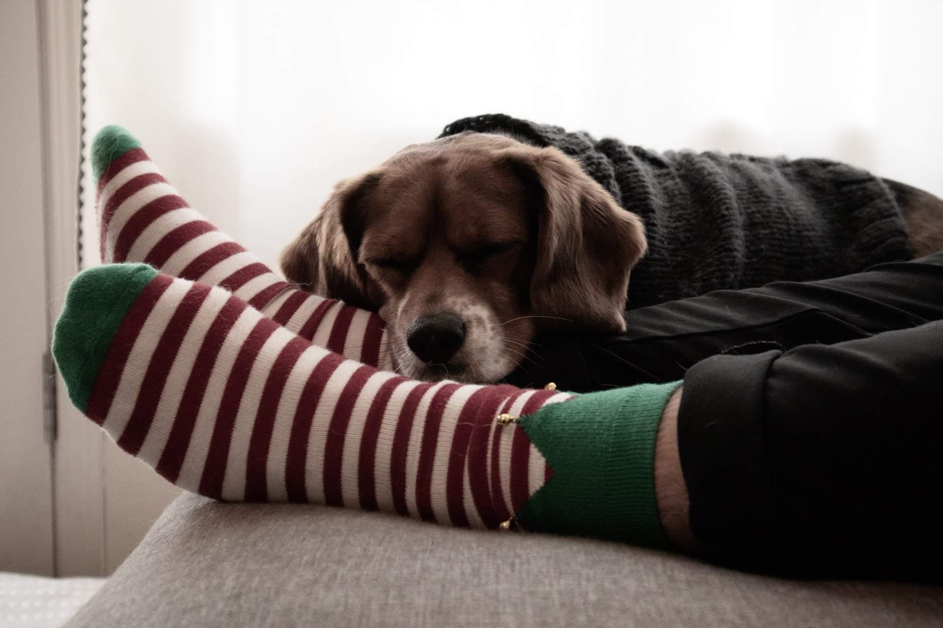 Неочікувана користь від шкарпеток / Фото Unsplash