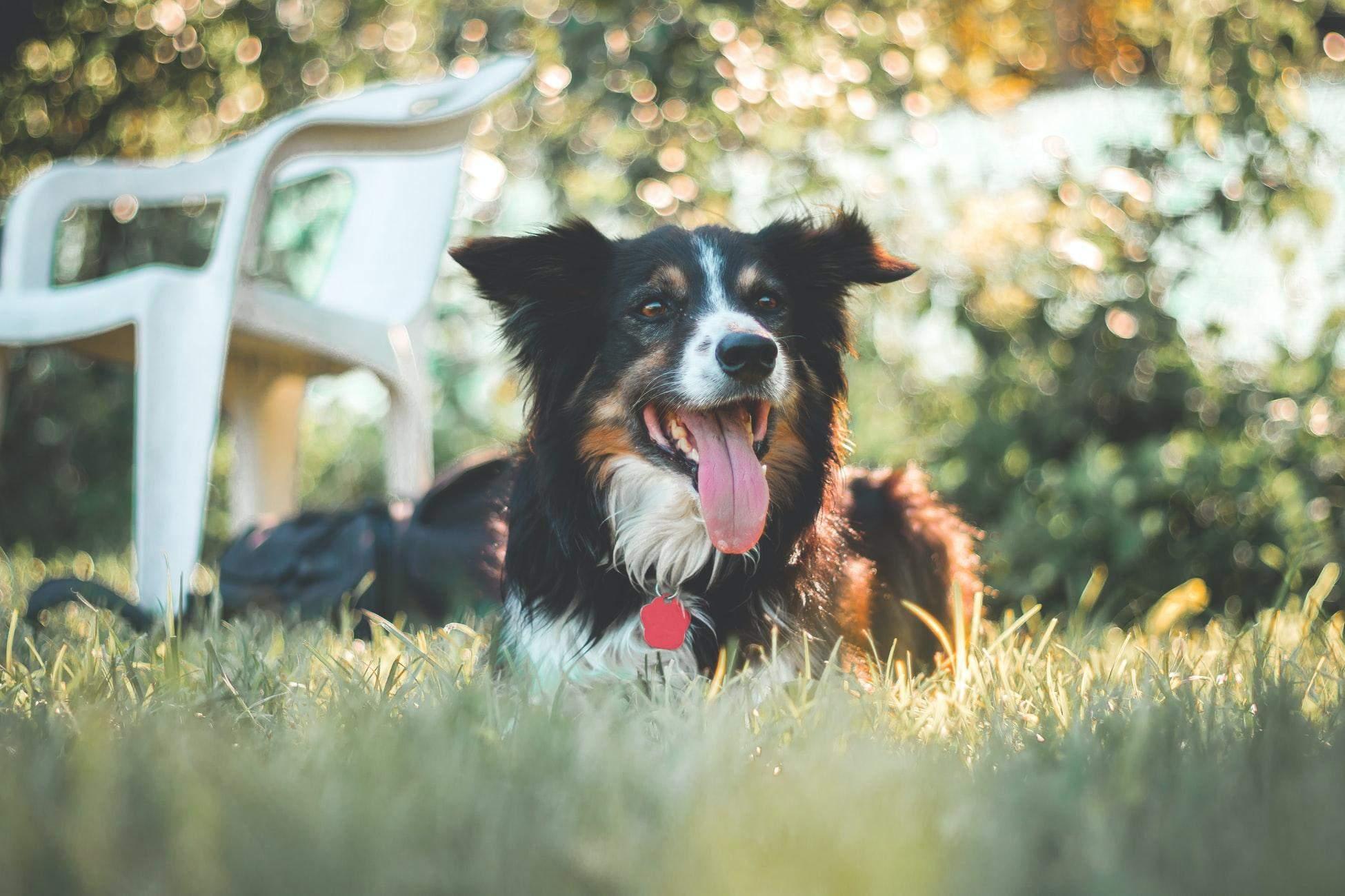 Не нужно коротко стричь длинношерстных собак