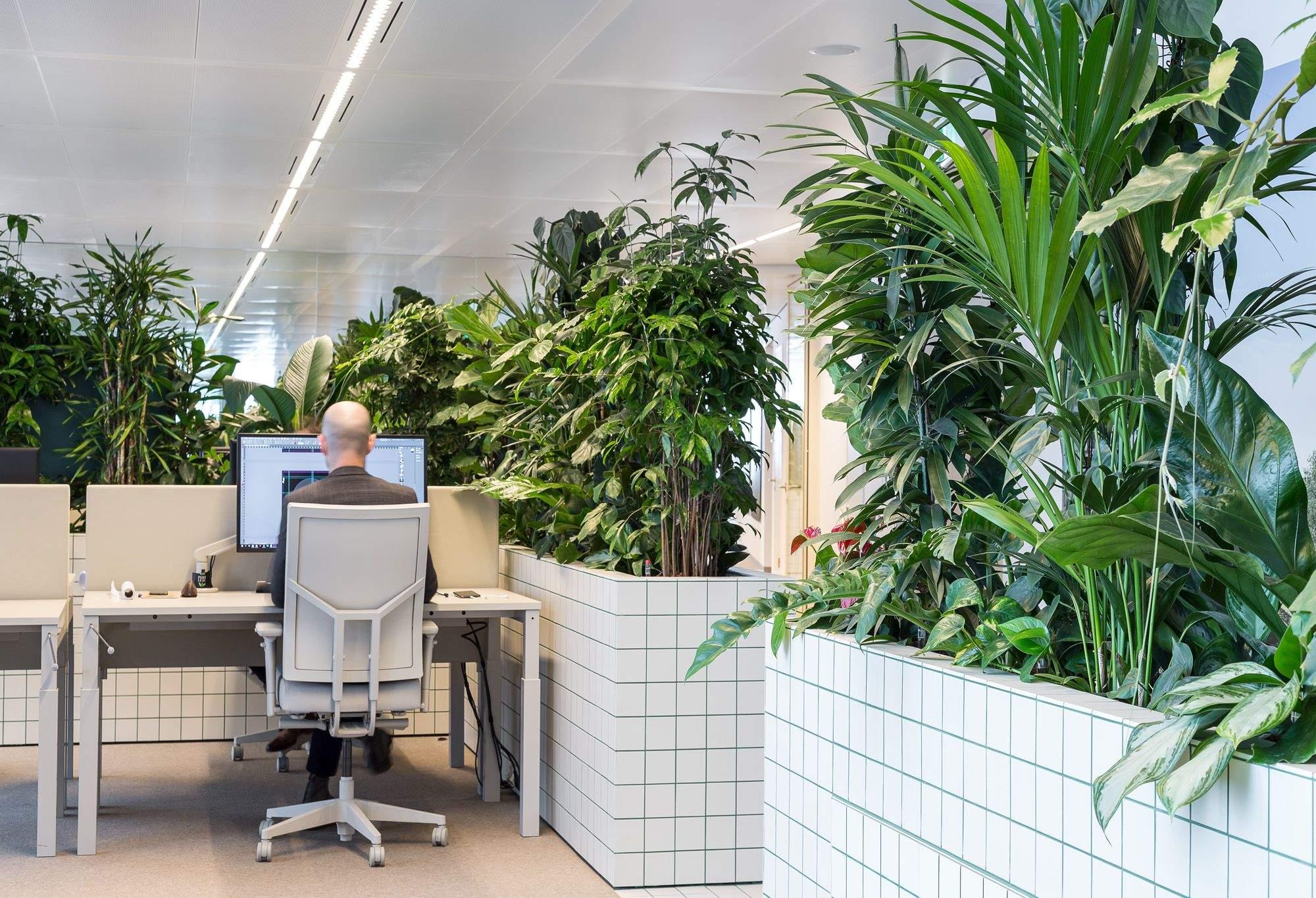Офісні джунглі в Нідерландах