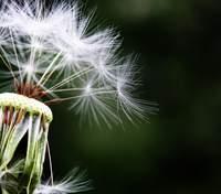 Як обрати ліки від алергії