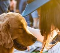 Чи тестували вашу косметику на тваринах: покрокова інструкція, як це дізнатися
