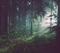 Человечество полностью вымрет, если не остановит вырубку лесов: важное исследование