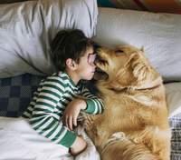 Собаки и дети в доме: как им подружиться