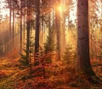 28 сентября – какой сегодня праздник и что нельзя делать в этот день
