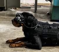 У США тестують VR-окуляри для собак: детальніше про технологію