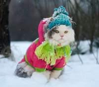 Якою буде погода надалі взимку: прогнози синоптиків