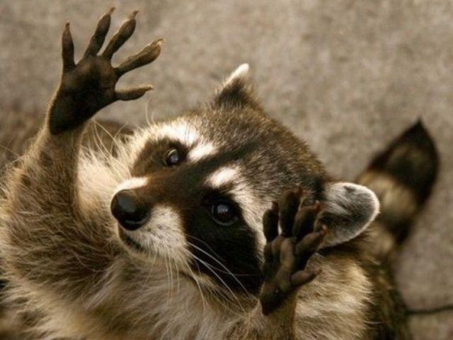 Привет картинки смешные животные