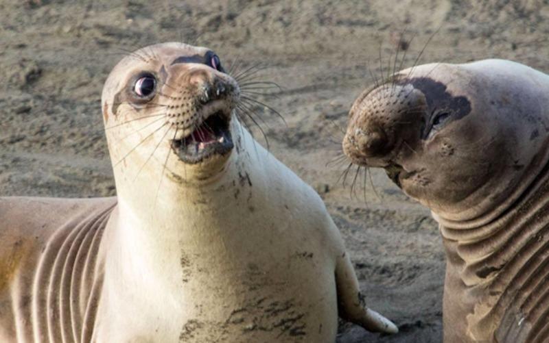 Прикольные картинки с тюленями