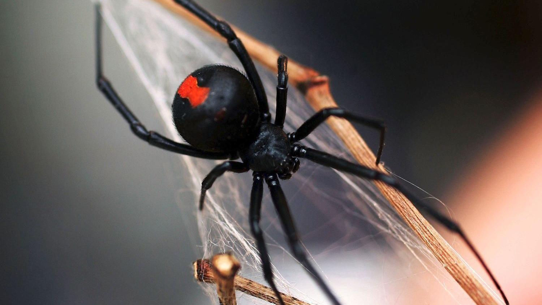 Что делать при укусе паука первая помощь